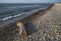 Trunk aground, Vic-la-Gardiole 02.jpg
