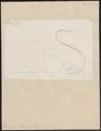 Trygon pastinaca - 1700-1880 - Print - Iconographia Zoologica - Special Collections University of Amsterdam - UBA01 IZ14200087.tif
