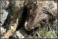 Tunyogmatolcs, 4731 Hungary - panoramio (38).jpg