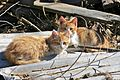 Two Kitties (6074307523).jpg