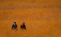 Two women in yellow field.jpg