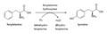 Tyrosine biosynthese 2.png
