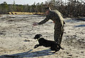 US Navy 120118-N-PO203-324 Col. Sam Kirby takes part in an improvised explosive device detector dog (IDD) 2.0 project technical demonstration durin.jpg