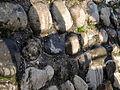 Uetliburg - Uto Kulm - Ruine Nordmauer 2012-10-29 16-01-24 (P7700).JPG