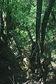 Uninsky potok spring.jpg