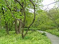 University of Copenhagen Botanical Garden - DSC07663.JPG