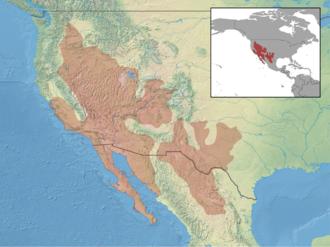 Common side-blotched lizard - Image: Uta stansburiana distribution