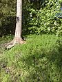 Uusimaa, Finland - panoramio - pan-opticon (43).jpg
