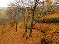 Valle del Genal 09.jpg