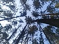 View of the sky through trees.jpg