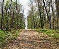 Vigy-forêt.JPG