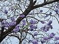 Vila Ipiranga, Londrina - PR, Brazil - panoramio.jpg