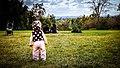 Vivien's Adventures (6881833331).jpg