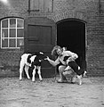 Vrouw met kalf en hond - Peasant woman with a calf and a dog (5669783352).jpg