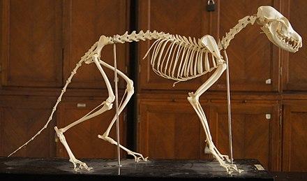 Dan und Phil, die ein Skelett datieren