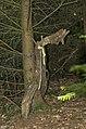 Waldmenschen Skulpturenpfad (Freiburg) jm9535.jpg