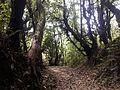 Walk through a forest.jpg