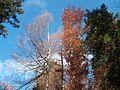 Wanderung im November - panoramio (41).jpg