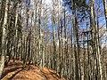 Wanderweg Bayerischer Wald.jpg