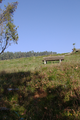 Wartenberg Landenhausen Trockenrasen Juniperus Ericales SCi 555520689 N.png