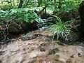 Wasserlauf bei Steinbach.jpg