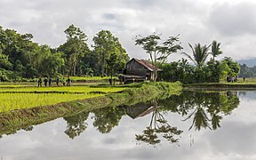 Water reflection of a wooden house surrounded by trees with farmers walking in the paddy fields of Vang Vieng Laos.jpg