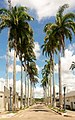 Webysther 20130224143209 - Rua das palmeiras (Rua Odilon Pratagi).jpg