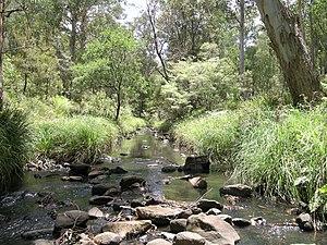 Werrikimbe National Park - Image: Werrikimbe NP
