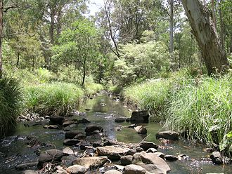 Eastern Australian temperate forests - A stream in Werrikimbe National Park in the Mid North Coast of NSW.