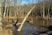 Wetlands in Mason Neck State Park VA.jpg