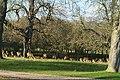 Windsor Great Park - geograph.org.uk - 1602378.jpg