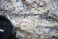 Winooski Dolomite (Middle Cambrian; Chimney Corner, Vermont, USA) 2.jpg