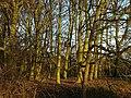 Winter Trees - geograph.org.uk - 1072640.jpg