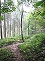 Woodland Path near Coneysthorpe - geograph.org.uk - 579950.jpg