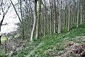 Woodland footpath - geograph.org.uk - 749110.jpg