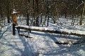 Wundschuh Schachenwald 01.jpg