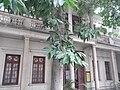 Xinhui 新會城 Jingtang Library 景堂圖書館 05 tree.JPG