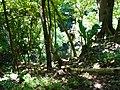 Xtoloc Cenote Chichen Itza.JPG