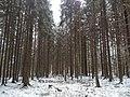 Zavodskoy, Leningradskaya oblast', Russia - panoramio.jpg