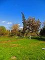 Zona de picnic Poniente.JPG