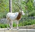 Zoo de Vincennes, Paris, France April 2014 (6).jpg