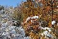(((مناظر زمستانی باغات مراغه ))) - panoramio (1).jpg