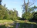 Біля річки Либідь - panoramio.jpg