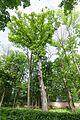 Виноградів Парк 4654.jpg