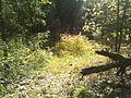 """В лесу """"за трассой"""" - panoramio.jpg"""