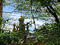 Голосіївський ліс IMG 8495.jpg