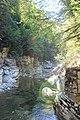 Горное озеро в самшитовом лесу.JPG