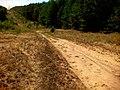 Дорога вздовж просіки - panoramio.jpg