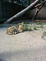 Зоологічний парк - відпочинок.jpg
