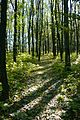 Осінній ліс. Струзьке л-во.jpg